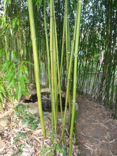 Les secrets du land art site du coll ge emile zola for Jardin zen avec bambou